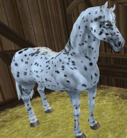 Фризская спортивная лошадь